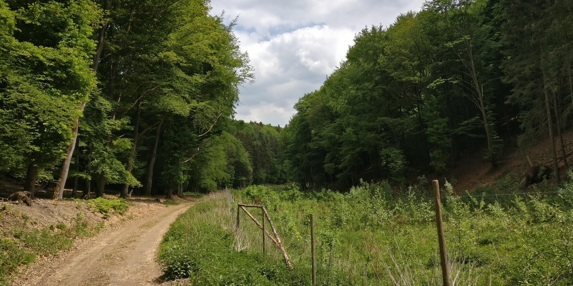 Impressionen SAHRTAL TRAIL 42K - RHEIN-AHR-MARSCH - Good Walking Club e.V. - Rheinbach