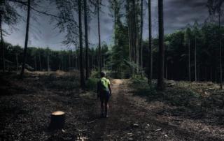 Foto Baumprojekt RHEIN-AHR-MARSCH