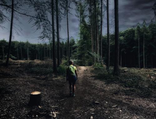 Packen wir es an: Wir wollen 1000 Bäume pflanzen!