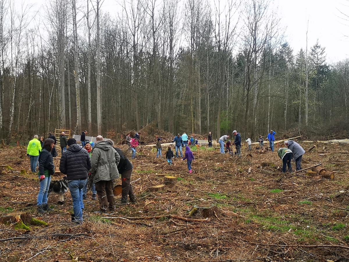 Baumpflanzaktion 2020 mit der Schutzgemeinschaft Deutscher Wald und Team RHEIN-AHR-MARSCH
