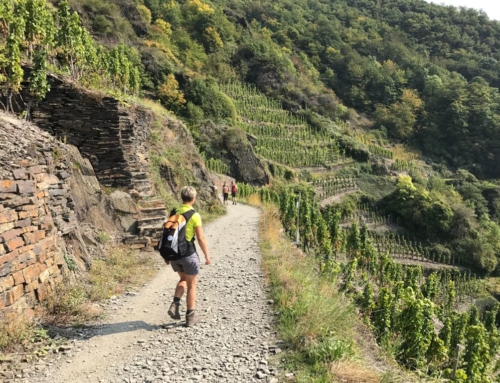 27 Kilometer-Trainingswalk zum Weinfrühling nach Dernau